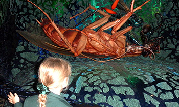 Marsden Primary students visit Bug Lab at Te Papa